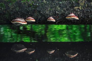 huba nad wodą