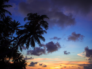 Sunset on the beach. Silhouette of people and a palm trees against the sky.