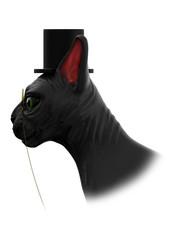 sphynx cat mister