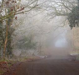 Foggy day in winter