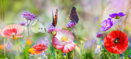 summer meadow with red poppies and butterfly