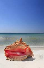 Wall Mural - Closeup of a Beautiful Conch on a White Sand Florida Beach