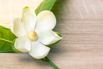 Photo sur Aluminium Magnolia White magnolia flower and green leaf on wooden desk.