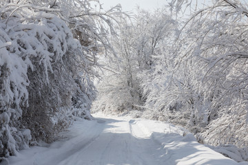 snowy road with trees at sunset, white winter landscape