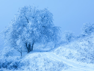 snowy trees on a hill on a white winter landscape
