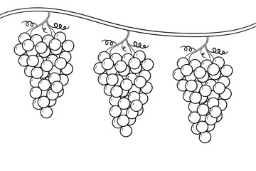 Coloring Page of Grape Bunches on a Vine a Dream of the Cupbearer in the Story of Jospeh