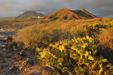 Opuntia cactus, volcanic landscape with succulent plants, dark clouds forming over arid mountains of southwestern Tenerife Canary Islands Spain.