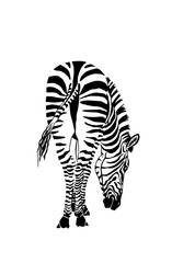 Graphical hand-drawn zebra isolated on white background,vector sketch ,tattoo,logo