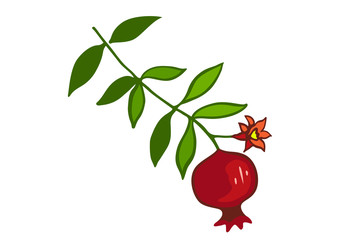 Sketch with pomegranate on branch with green leaves and flower. Banner with red pomegranate fruit isolated vector illustration.