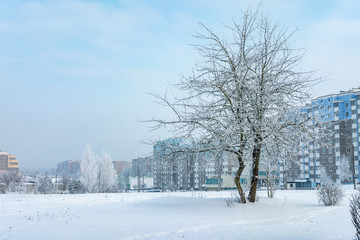 Panorama of residential area of the city on a sunny winter day with hoarfrost trees