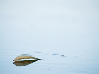 Dried leaf sailing on frozen lake surface. Thin ice mirroring leaf shapes.