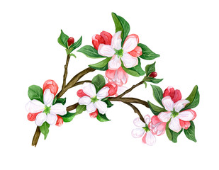 Watercolor Botanical twig of leaves and flowers on white background.