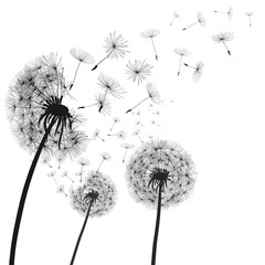 Abstract black dandelion, dandelion with flying seeds illustration - vector