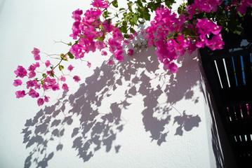 A flowering vine