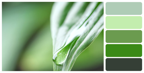 Macro view of water drop on green leaf. Color palette