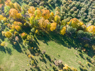 park trees with bright yellow and orange foliage in autumn. city park scene aerial view
