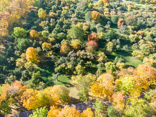 picturesque natural scene, aerial top view. beautiful trees with bright colorful foliage growing in autumnal park