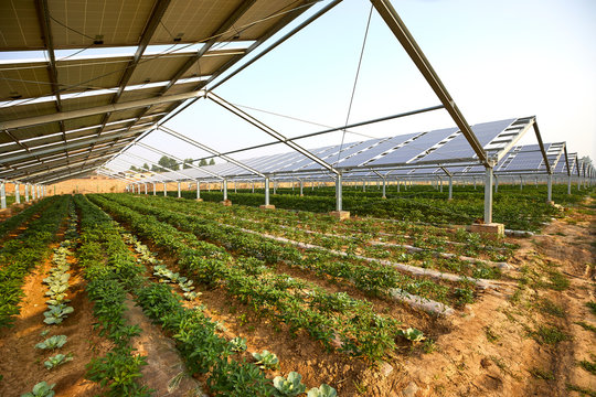 Vegetable greenhouse planted under solar photovoltaic panels