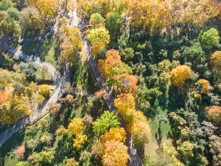 beautiful park scene during fall season. trees with bright yellow, orange, red leaves. aerial top view