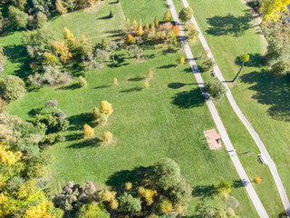 aerial image of autumnal trees growing in city park. natural landscape during fall season