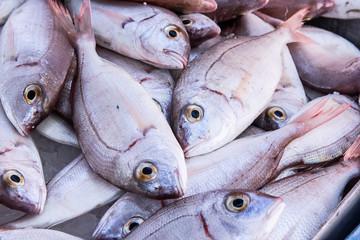 Whole fish at a market