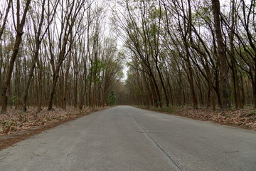Country concrete road in forest rubber tree at Ban Khai Rayong Thailand.