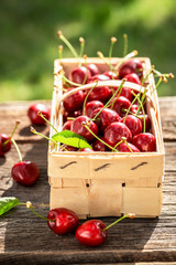 Ripe and sweet cherries in wooden punnet