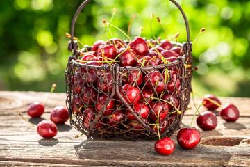Tasty sweet cherries in a summer garden
