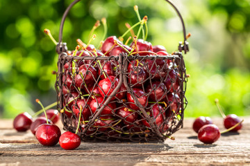 Freshly harvested sweet cherries in a sunny day