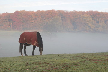 Horse with a blanket to protect the horse against cold during first cold nights in November