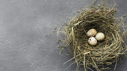 Quail eggs in straw nest on gray table