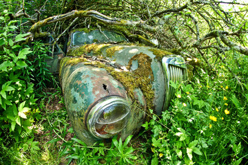 The abandoned car cemetery hidden deep in the swedish woods. Nature is slowly taking control.