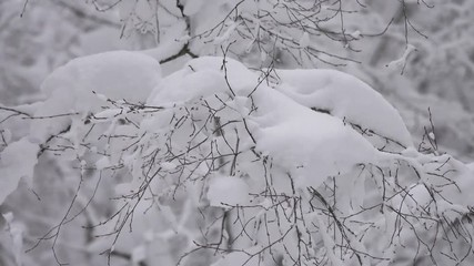 Wall Mural - Beautiful landscape with snow covered branches in winter forest, 4k