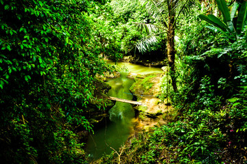 Lush green rain forest tropical monsoon jungle with trees, grass, plantation for summer school trekking camp