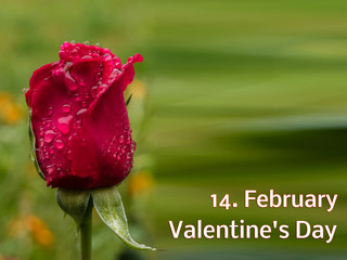 Template Rose 14.February Valentine's Day