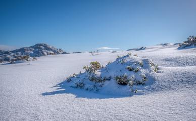 Coberto de neve
