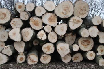 Tree trunks on a pile after stub down sawing at the Hoofdweg in Nieuwerkerk aan den IJssel in the Netherlands