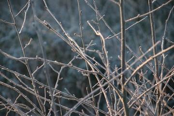 Frozen green leaves after night frost in Park Hitland in NIeuwerkerk aan den IJssel in the Netherlands