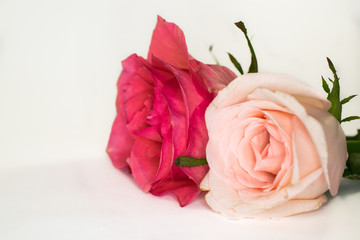 roses on top of a table for vintage interior decoration
