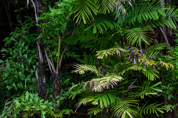 Forest growth trees,nature green trees rainforest for background