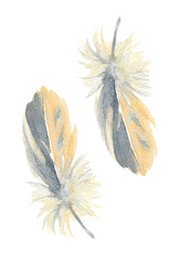 Stylized semiplume feather of the yellow pine grosbeak. Watercolor Illustration.
