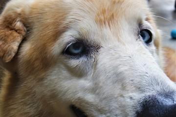 Olhar de um cão