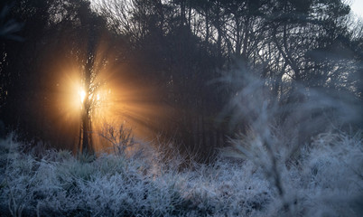 Cold sunrise through the trees