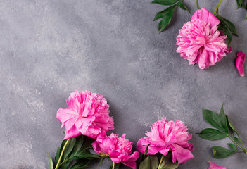 Beautiful pink peony flowers on grey table