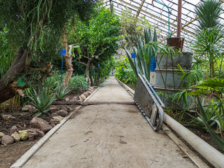 Path in the greenhouse with tropical plants. Objects for cleaning and watering of plants. Glass roof