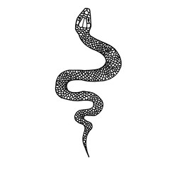 Hand drawn snake illustration in doodle style. Design element for poster, card, t shirt.