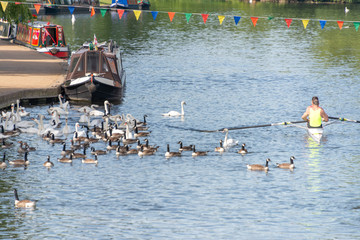 rowers crossing the finishing line at regatta