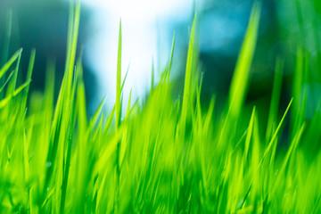 Green macro grass background