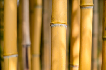 branches of brown bamboo forest on a bright day background