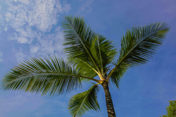 Palm tree fronds silhouetted against the bright blue sky